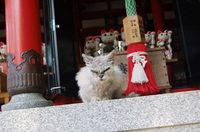 猫がずらっとたくさんある「お松大権現」