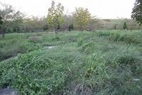 香流川砂防公園が自然に還りすぎだった。