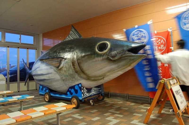 http://hakkaku-culture.info/webmagazine/images/omaezakibigfish.jpg